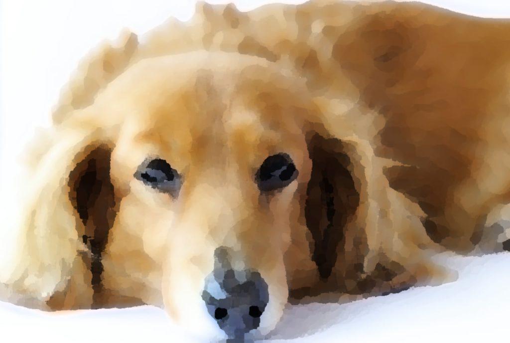 Photoshopでかわいい画像を手描き風に加工する方法