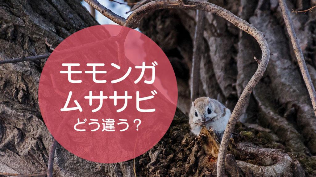 「モモンガ」と「ムササビ」の違いをご存知ですか!?