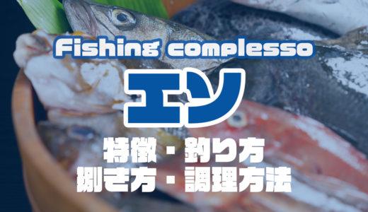 エソって何!?特徴・釣り方・捌き方・調理方法とことん解説!