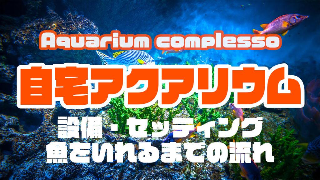 海水アクアリウムをできるだけ低予算ではじめる方法 自宅で90cm水槽を使った迫力の自分水族館