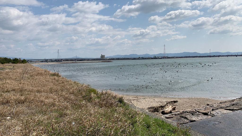 佐奈川河口から突堤