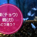 「蝶(チョウ)」と「蛾(ガ)」の違いをご存知ですか!?