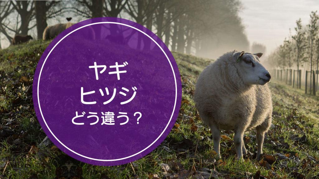 「ヤギ」と「ヒツジ」の違いをご存知ですか!?