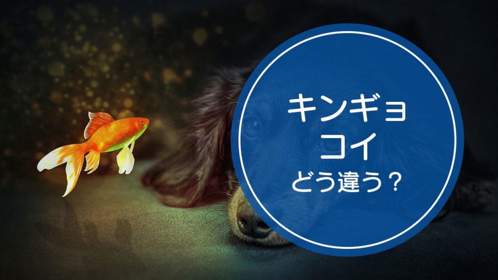 「金魚(キンギョ)」と「鯉(コイ)」の違いをご存知ですか!?