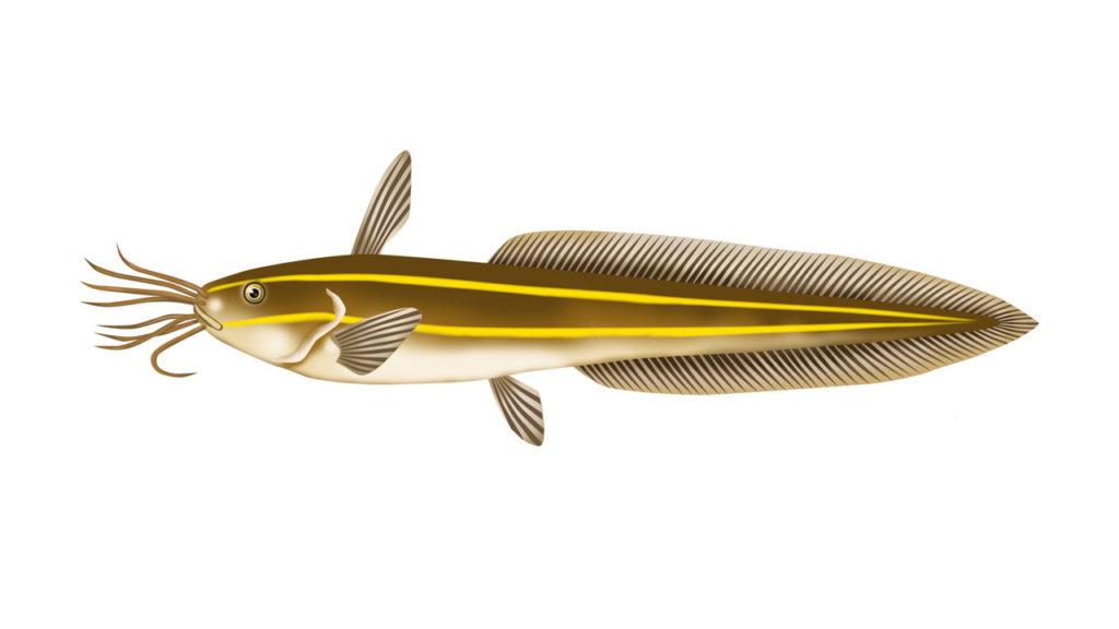 あぶない海の魚たち!触るな危険・釣りのときに要注意な魚って?