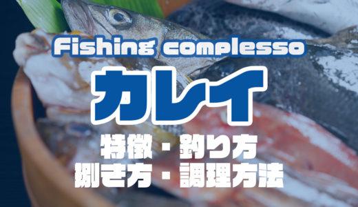カレイって何!?特徴・釣り方・捌き方・調理方法とことん解説!