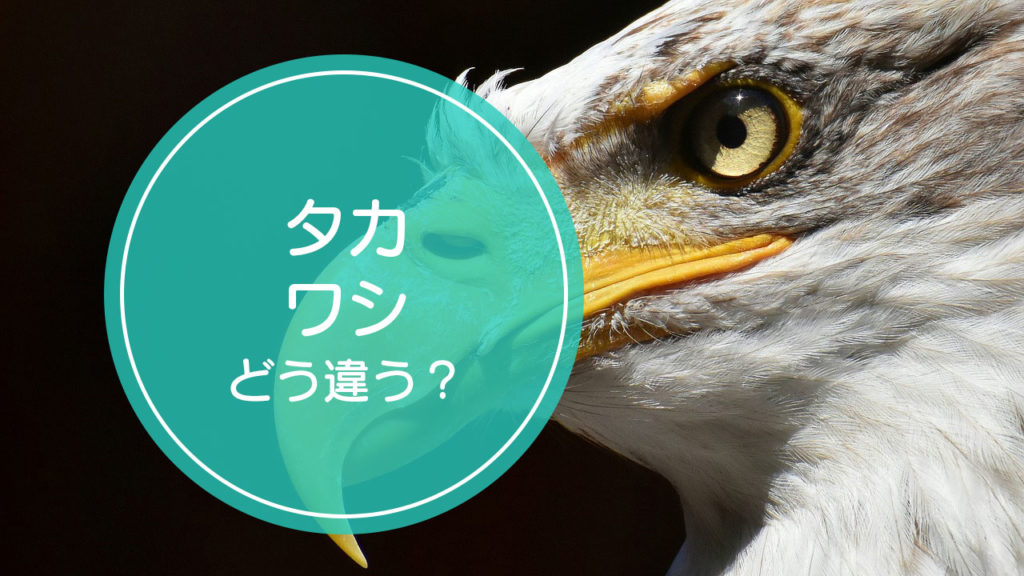 「タカ」と「ワシ」の違いをご存知ですか!?