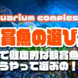 元気で健康的なアクアリウム用観賞魚の選び方