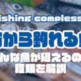堤防から釣れる魚って??ターゲットにオススメの魚種を解説!!