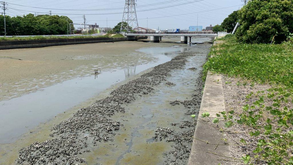 新居川河口の釣り場情報【Fishing complesso 愛知県の釣り場情報】