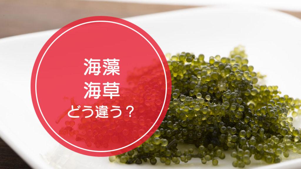 「海藻」と「海草」の違いをご存知ですか!?