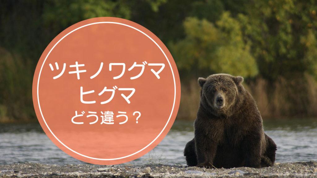 「ツキノワグマ」と「ヒグマ」の違いをご存知ですか!?