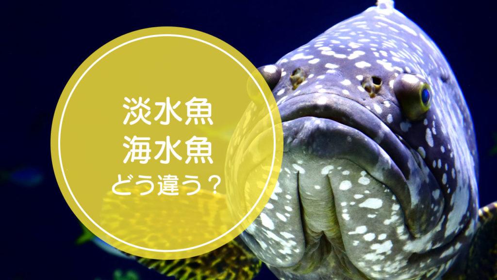 「淡水魚」と「海水魚」の違いをご存知ですか!?