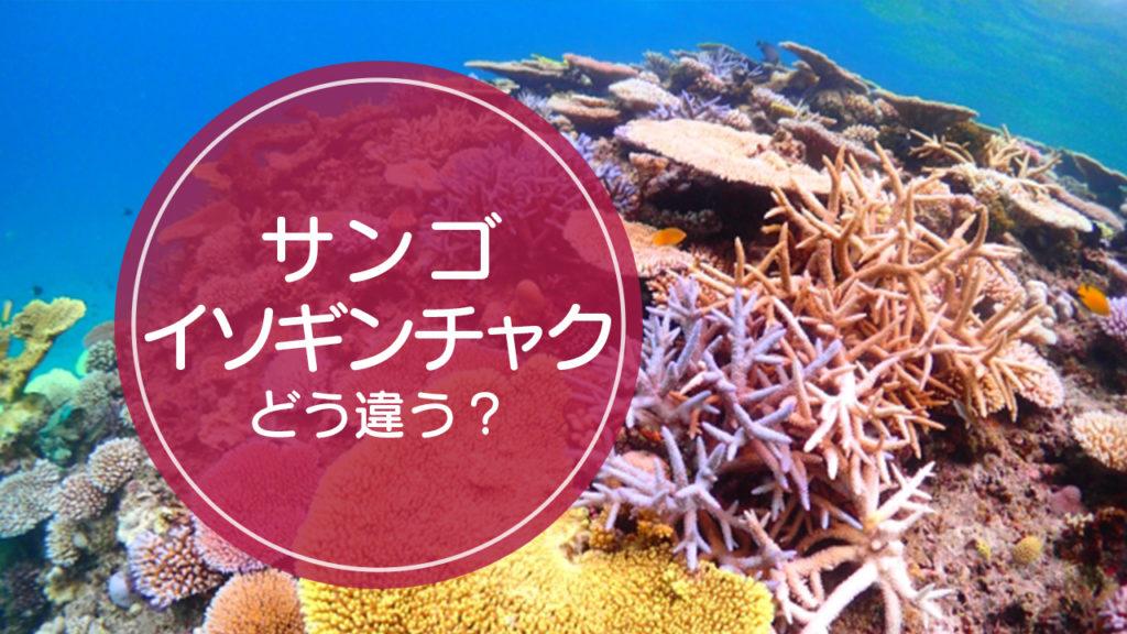 サンゴ・イソギンチャク違い
