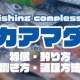 アカアマダイって何!?特徴・釣り方・捌き方・調理方法とことん解説!