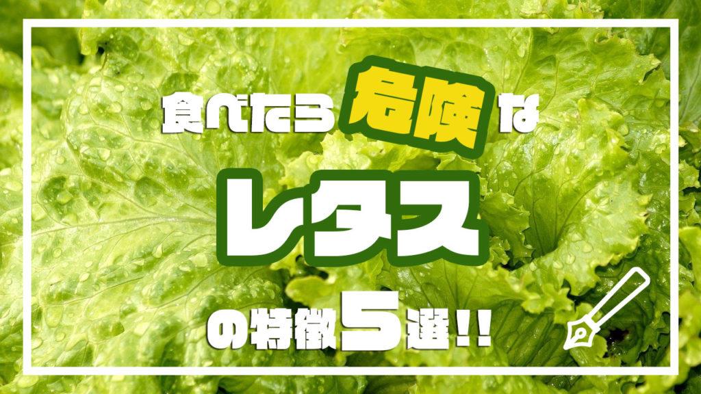 食べたら危険なレタスの特徴5選!!