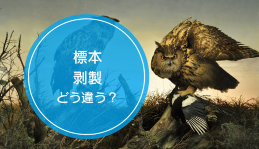 「標本」と「剥製」の違いをご存知ですか!?