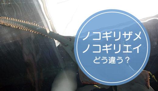 「ノコギリザメ」と「ノコギリエイ」の違いをご存知ですか!?