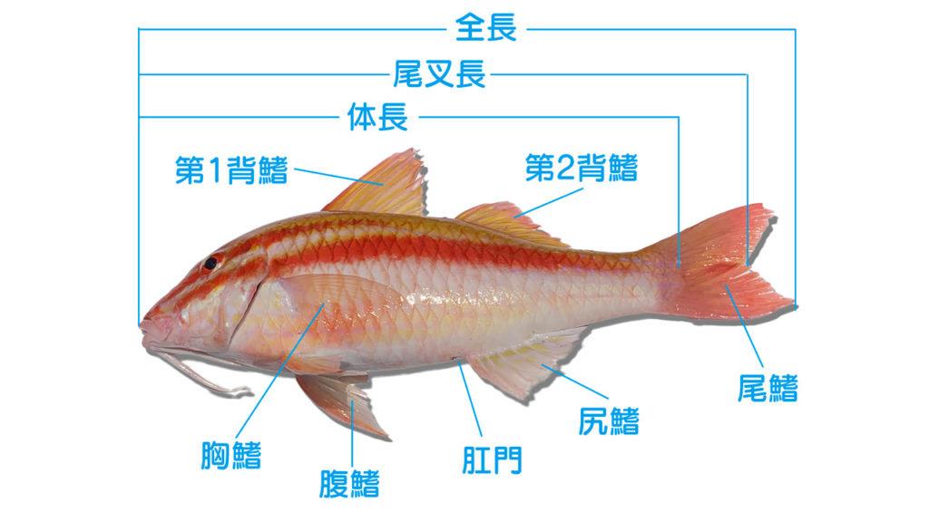 魚の体のしくみを知れば釣果アップ