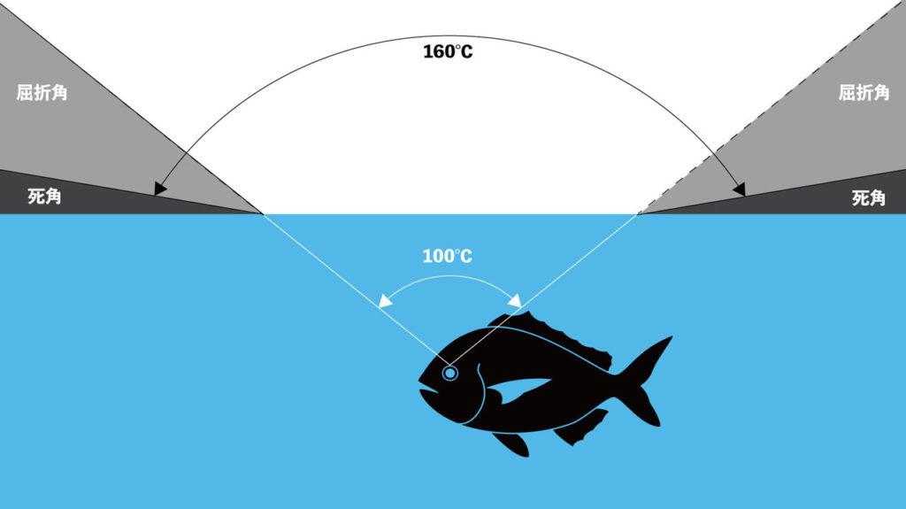 魚から釣り人は見えてる??|魚の視界を知って釣果アップ