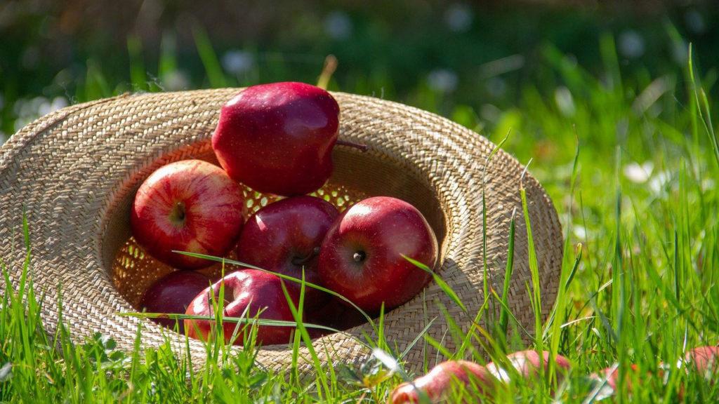 新鮮なリンゴの特徴とは