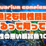 アクアリウムで相性の悪い観賞魚10選!!