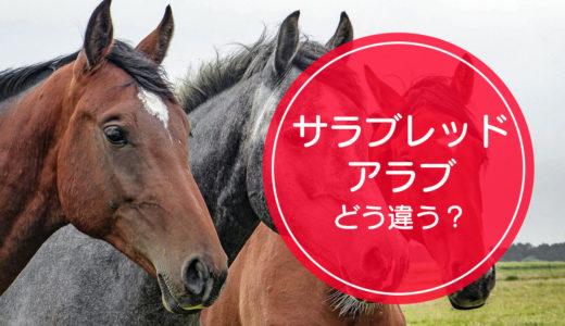 競走馬の「サラブレッド」と「アラブ」の違いをご存知ですか!?