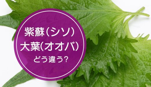 「紫蘇(しそ)」と「大葉(おおば)」の違いをご存知ですか!?